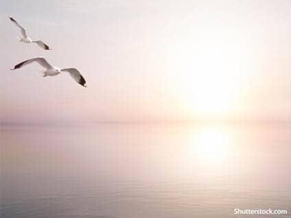 birds ocean