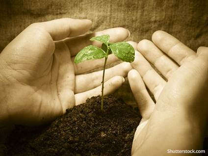 environment-plant-grow-nurture-hands
