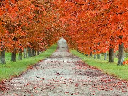 fall-orange-leaves-path-nature