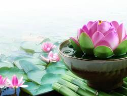 flower-lotus-meditation-water
