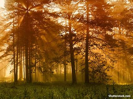 nature dramatic forest