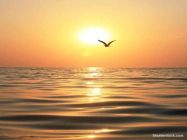 nature ocean bird