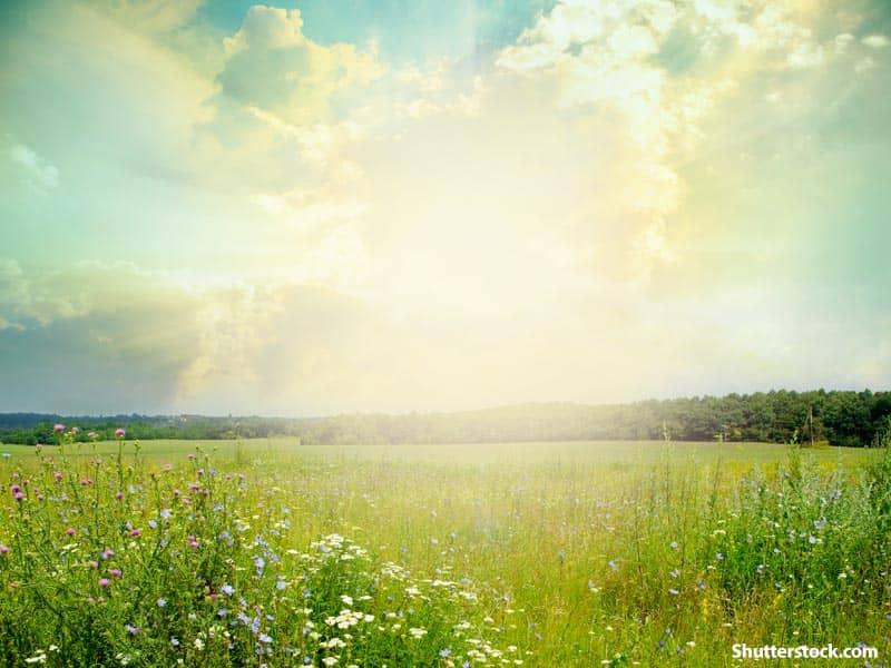 nature open field