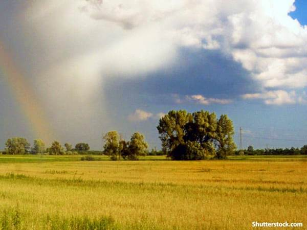 nature rainbow field