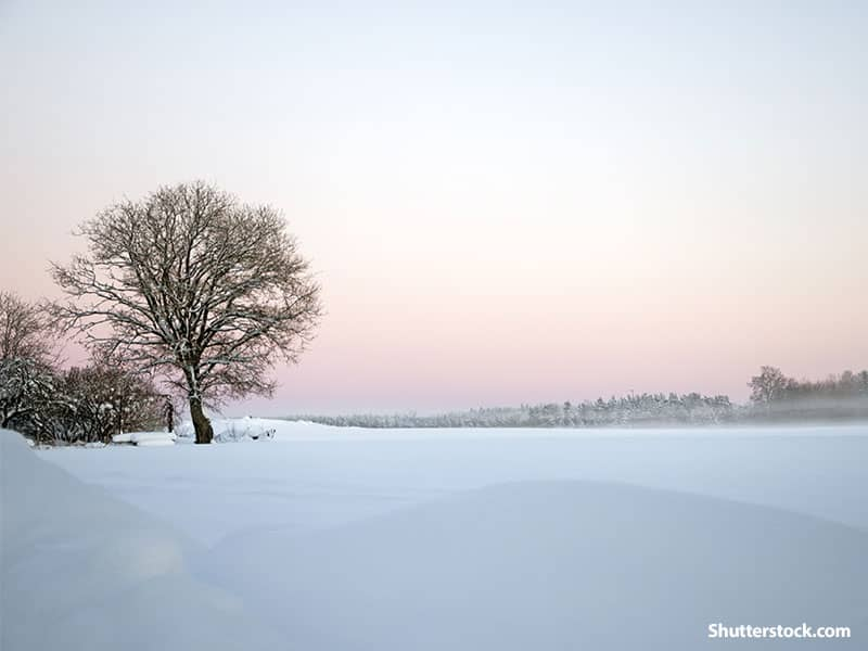 nature winter background