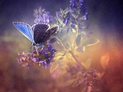 Resultado de imagem para angel butterfly