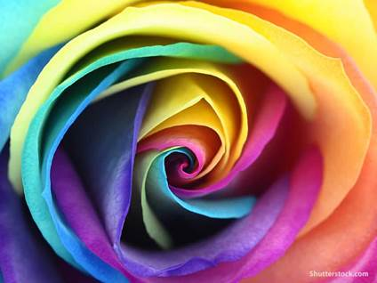 flower-rose-colorful-closeup