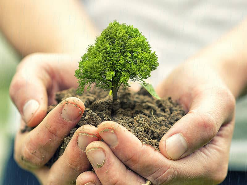 6 Reasons To Plant Trees In Israel L The Symbol Of