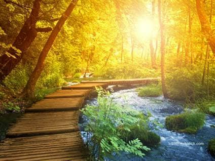 path besides brook