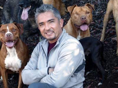 Cesar Millan the Dog Whisperer Twitter