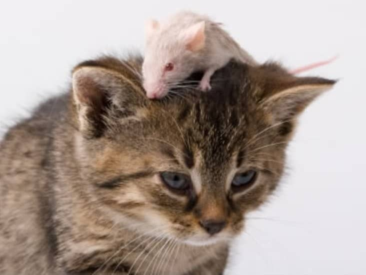 Картинки кошки и мышки вместе, картинках для