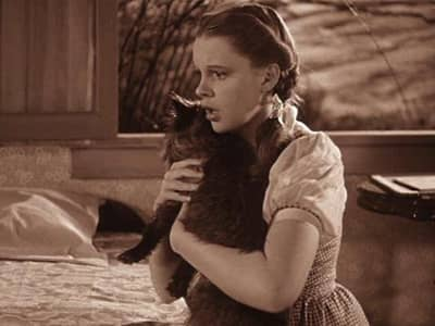wizard of oz dorothy toto