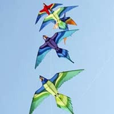 Kites in shape of birds