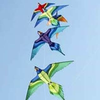 Kites in shape of birds