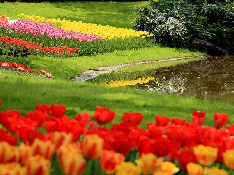 God 39 s pharmacy beliefnet for God s garden pharmacy