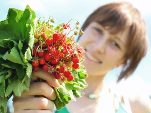 Woman holding freshly picked raspberries