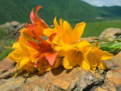 Midsummer, Summer Solstice, Litha, Flowers on Rocks