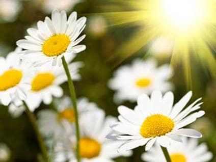Seven Steps to Growing a Garden of Prayer