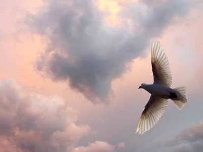 Dove of hope