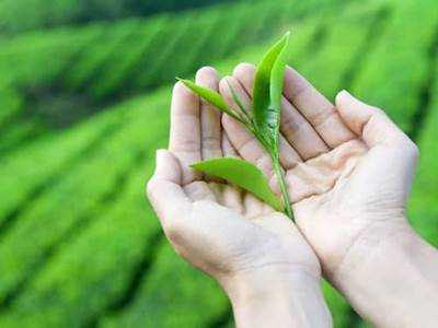 Woman holding tender leaves