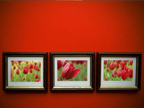 Framed flower photos