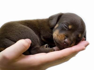 Hand holding a puppy