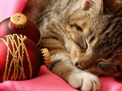 Sleeping cat with red ornaments