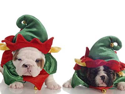 Dogs in elf costumes