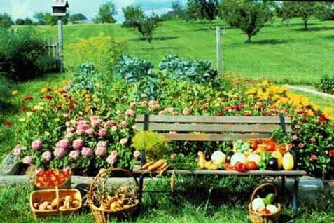 healthy plants cover photo