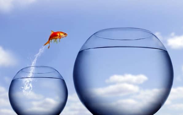 Goldfish leaping