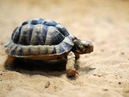 Tiny cute turtle