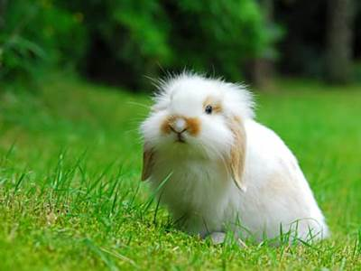 Droopy eared fuzzy bunny