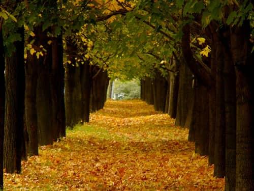Autumn nature path