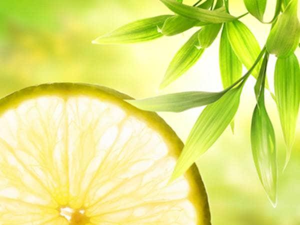 Lemon slice and tree branch