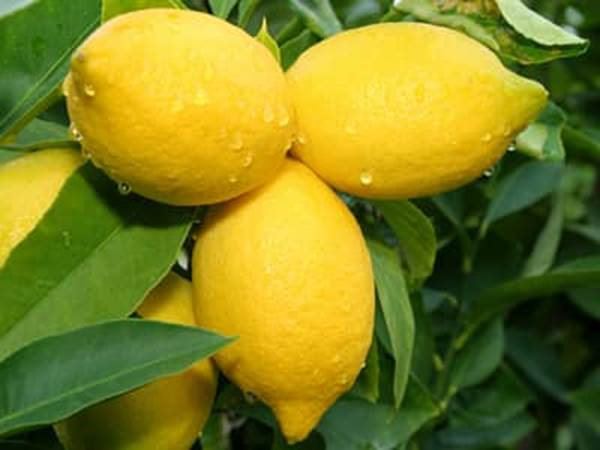 Hidden Health Secrets Of Lemons Benefits Of Lemons Health