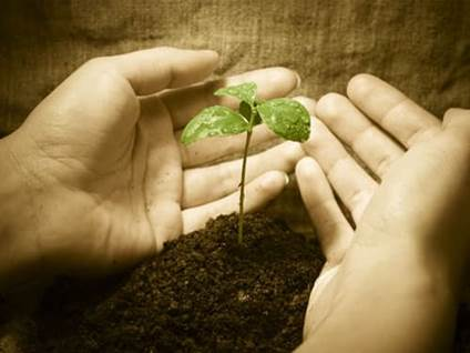 Fragile plant seedling