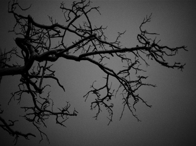 darkness, light, near death