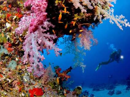 Scuba diver underwater looking at coral reef
