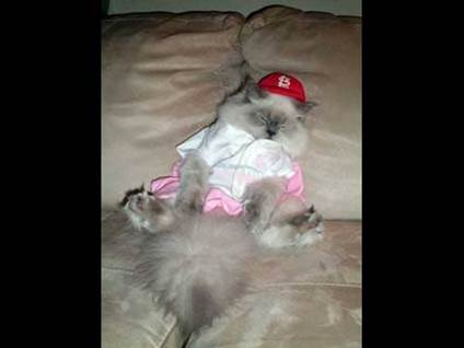 Halloween Cat Costume baseball player kitty