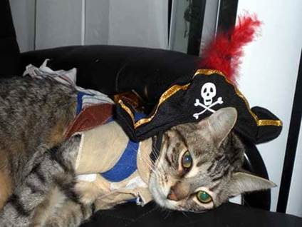 Halloween Cat Costume pirate kitty