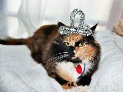 Halloween Cat Costume princess kitty