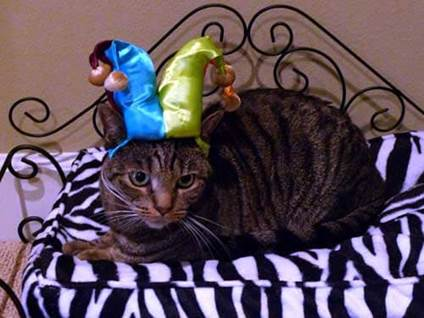 Halloween Cat Costume court jester kitty