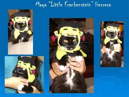 Halloween Cat Costume frankenstein kitty