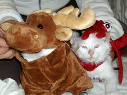 Halloween Cat Costume moose kitty lobster kitty