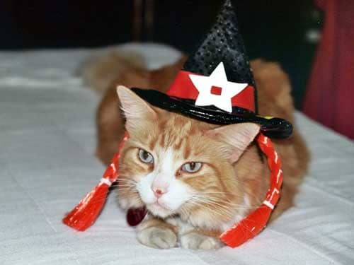 Halloween Cat Costume witch kitty