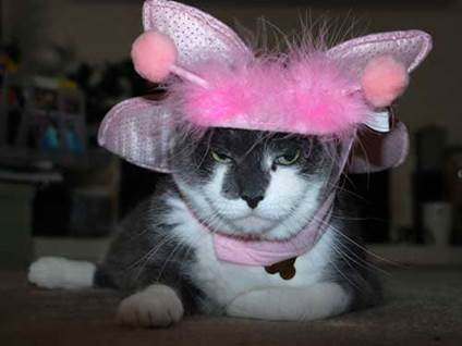 Halloween Cat Costume pink butterfly kitty