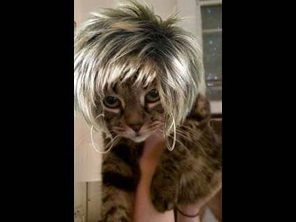 Halloween Cat Costume Tina Turner kitty