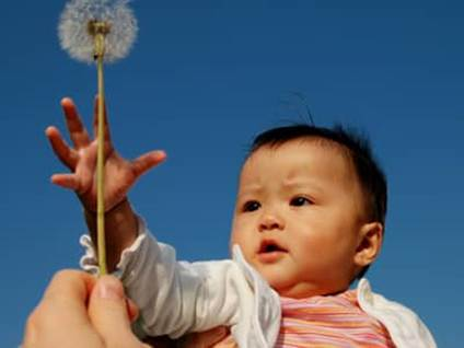 Little Asian baby holding a dandelion
