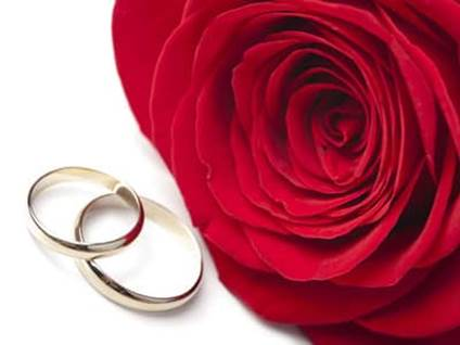 Rose with two gold rings.