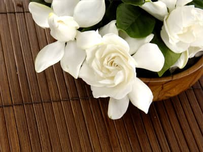 Flower names flower meanings and inspiration inspiring flowers gardenia mightylinksfo